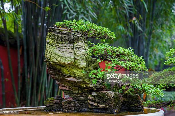 Bonsai Tree in garden,Chengdu,China.