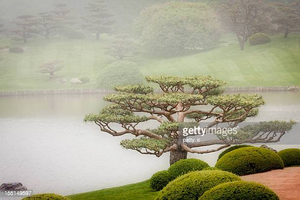 Bonsai Baum im Japanischen Garten