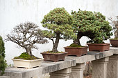 Bonsai trees lined up in a Chinese traditional garden