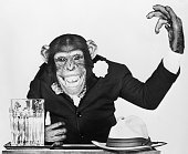 Bonzo the chimp star for Universal International Pictures is dressedup like a campaigning politician