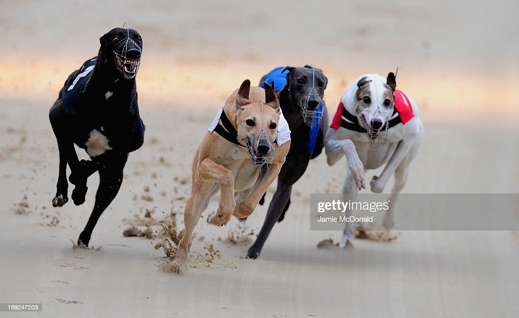 Boo Boos Bonnie (2nd L) wins Race 3 at Romford Greyhound Stadium on January 10, 2013 in Romford, England.