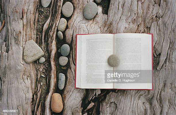 Book lying on driftwood