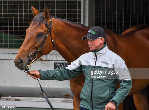 Boom Time after winning the Caulfield Cup at Caulfield Racecourse on October 22 2017 in Caulfield Australia
