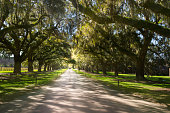 Boone Hall Plantation in Charleston South Carolina, USA.