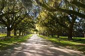 Boone Hall Plantation in Charleston South Carolina, USA.