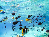 Bora Bora, French Polynesia. Snorkeling in turquoise waters. Pacific Ocean.