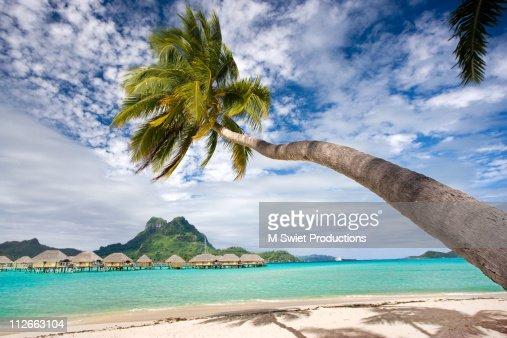 Bora Bora palm tree island