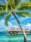 Bora-Bora Luxury Resort under Palm Trees