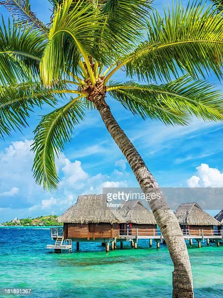 Bora-Bora Resort de luxo com árvores de Palma