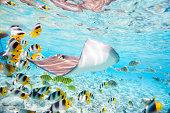 'Colorful fish, stingray and black tipped sharks underwater in Bora Bora lagoon'