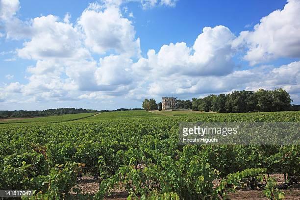 Bordeaux vineyards, Chateau Laessan, Medoc, Girode, France