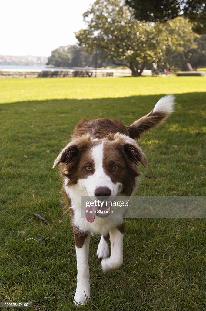Wag Dog Walking Pay