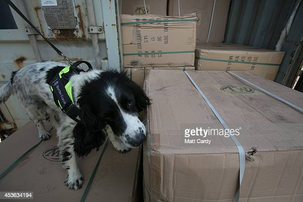 Border Force detector dog checks inside a shipping container at Southampton docks on August 13 2014 in Southampton England Border Force is the law...