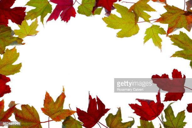 Border of autumnal maple leaves around white copy space.