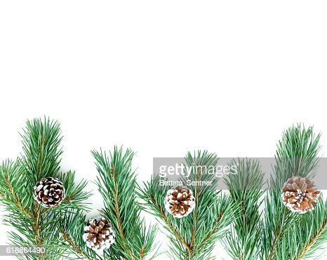 Border out of Fir Tree Twigs with Pine Cones : Stock Photo