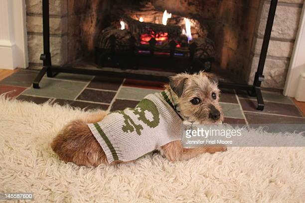 Border Terrier by fireplace