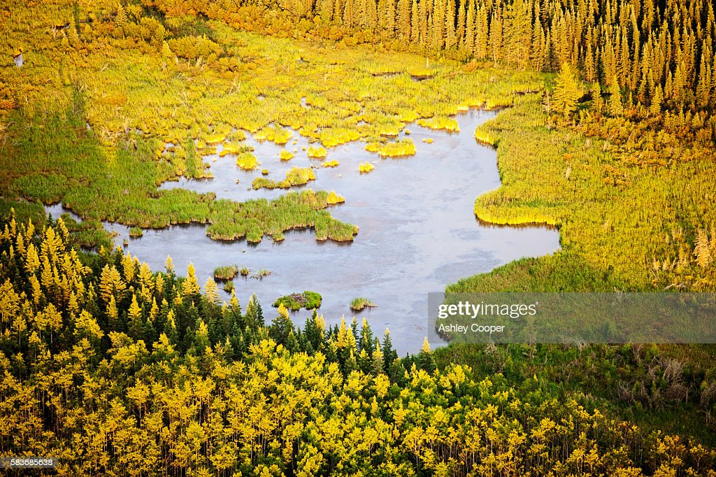 Boreal forest and Muskeg in Northern Alberta, Canada near Fort McMurray.