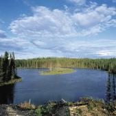 Boreal forest Hudson Bay Quebec Canada