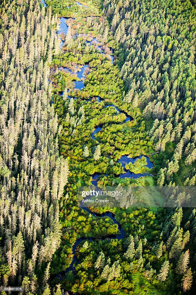Boreal forest in Northern Alberta, Canada near Fort McMurray.