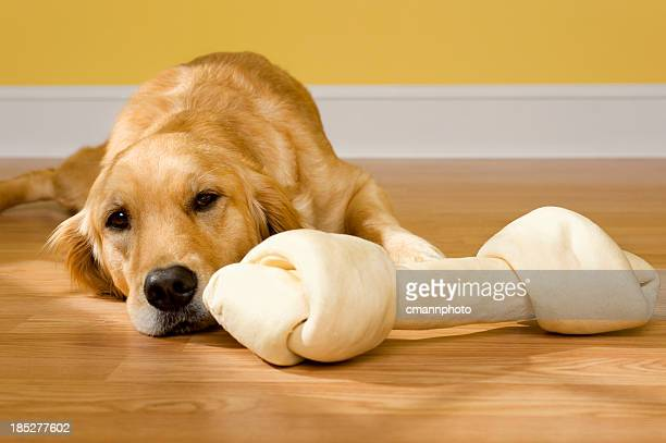 A bored golden retriever laying on floor