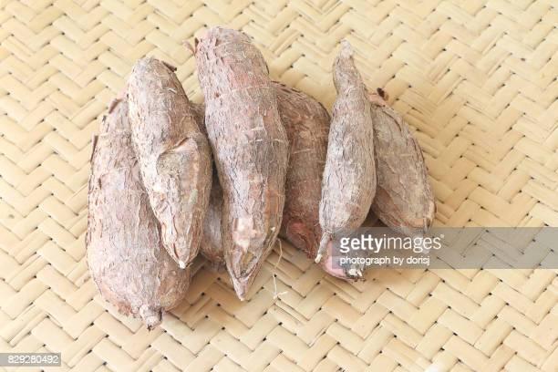 Borneo Tapioca or Cassava root
