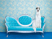 Borzoi (Canis lupus familiaris) on couch