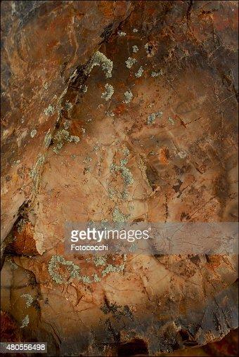 Bosque Petrificado, Santa Cruz, Argentina : Stock Photo