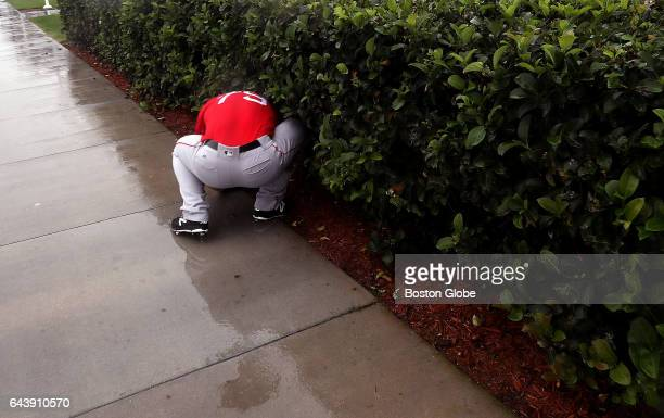 Boston Red Sox relief pitcher Ben Taylor goes looking in the hedges for a ball as he throws long toss in the rain on day ten of Red Sox Spring...