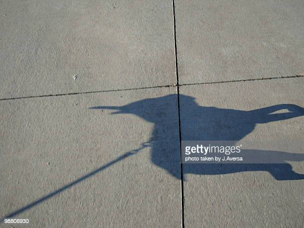 Boston Terrier Dog Shadow