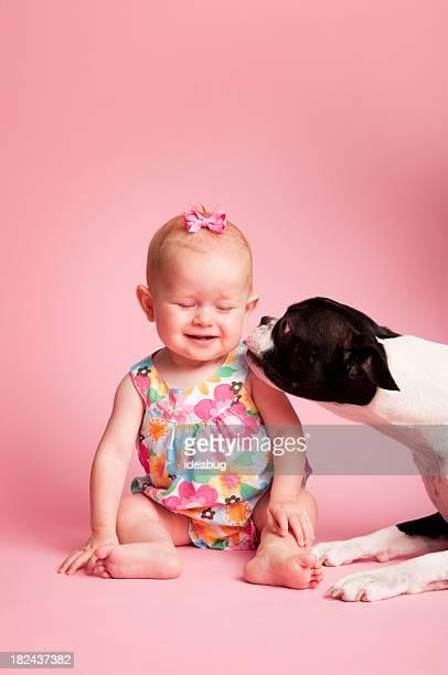 Boston Terrier Baciare un bambino Ragazza su sfondo rosa