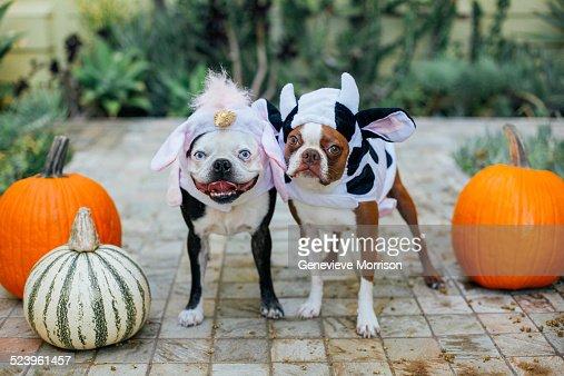 keywords - Halloween Costumes In Boston