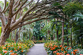 Botanic garden alley, walkway. Sydney Royal Botanic Gardens alley with tree and orange flowers