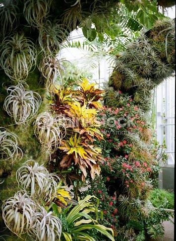 botanical garden greenhouse air plants stock photo thinkstock. Black Bedroom Furniture Sets. Home Design Ideas