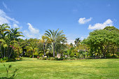 Tropical botanical garden. Palm trees and lawn