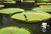 Botanical Garden in Pamplemousse