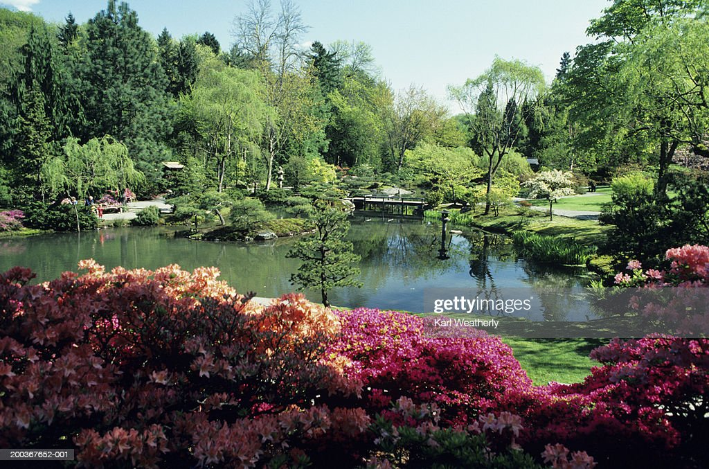 Botanical garden in summer : Stock Photo