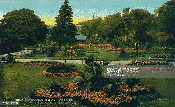 Botanical Gardens Regents Park London' circa 1910 [G D D London circa 1910] Artist Unknown