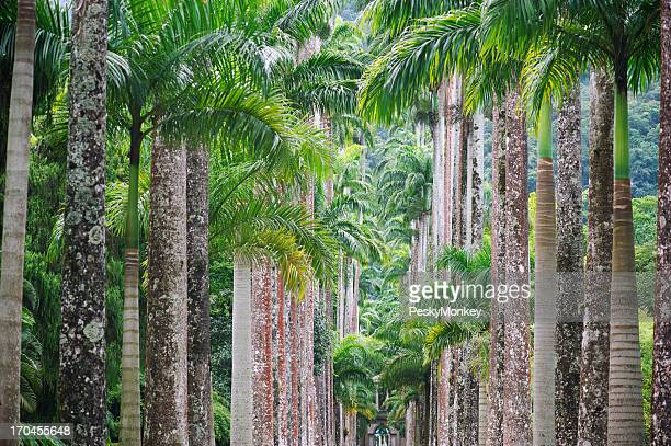 Botanical Gardens Royal Palm Trees in a Row Full Frame