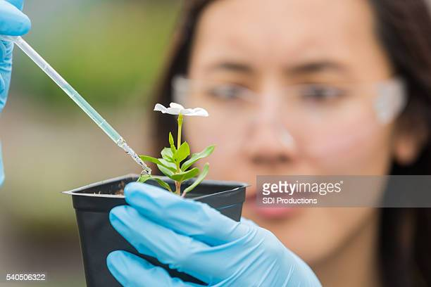Botanist studying flower