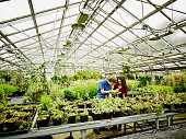 Botanists examining plant in research greenhouse