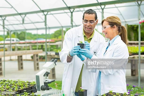Inspektion Botaniker eine kleine Grüne Pflanze