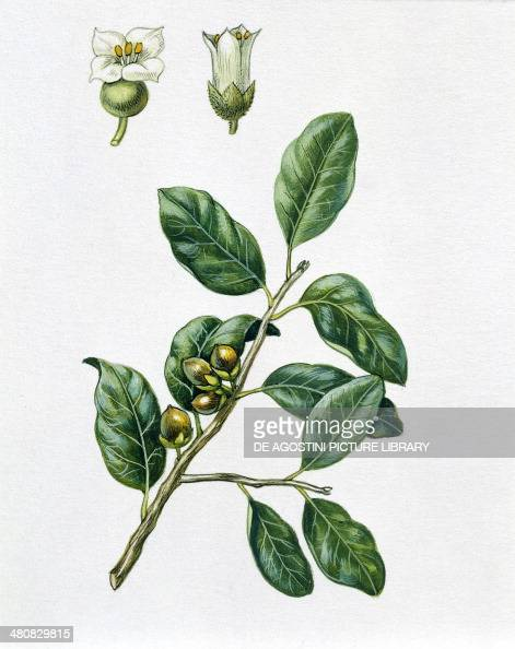 how to draw olive tree leaves