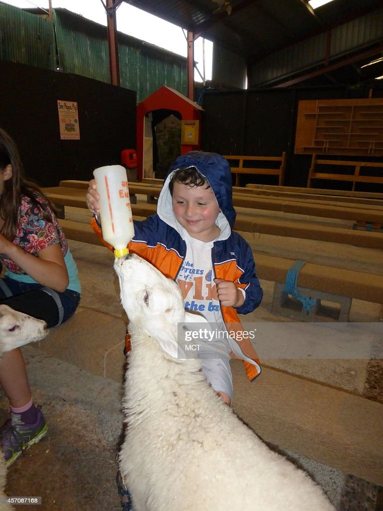Bottle feeding lambs is among the children's activities at Cantref. Located in Brecon, this is a great spot for family fun.