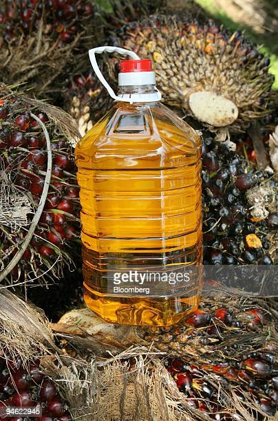 A bottle of processed palm oil is arranged for a photograph atop a stack of oil palm fruits at a plantation on the outskirts of Kuala Lumpur Malaysia...
