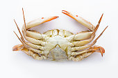 Bottom of the crab.Serrated mud crab.Steamed crab.Crab isolated on white background.