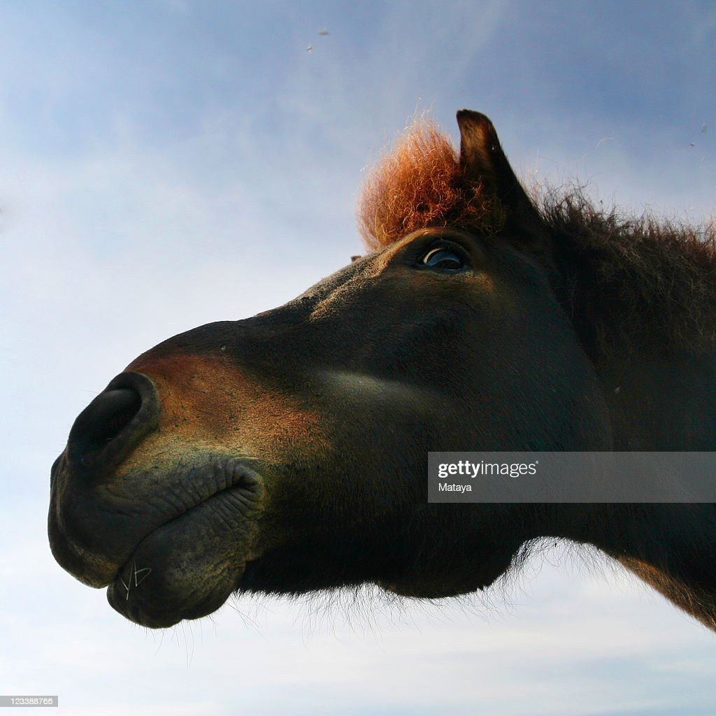 Bottom up perspective of horse : Stock Photo