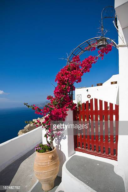 bougainvillea and house entrance