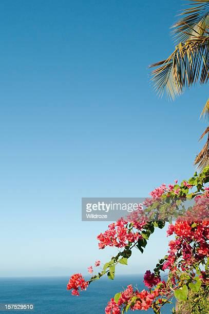 Buganville e palms