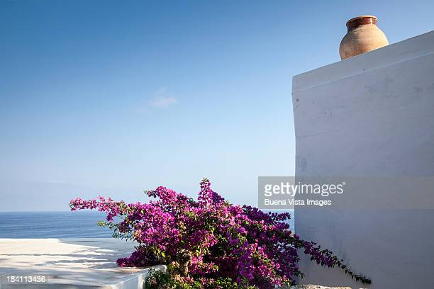 Bougainvillea and white house in a mediterranean v