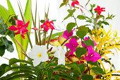 Bougainvillea Coconut Palm and Frangipani flowers